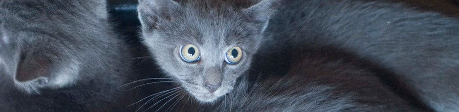 Cozy up with litter of gray kittens